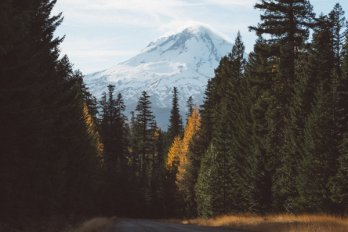 Conical snow-capped volcano in the Pacific Northwest U.S., as viewed from a forest road lined with conifers