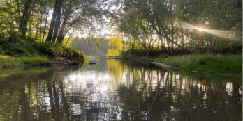 Placid small river flowing through summer forest with grassy banks, setting sun shining through the trees.