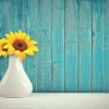 Sunflowers in a white vase on a white surface against indigo-stained wooden clapboards